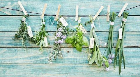Lavender hanging at Freya Sherlock apothecary