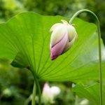 Plants for Chinese Herbal Medicine with Freya Sherlock